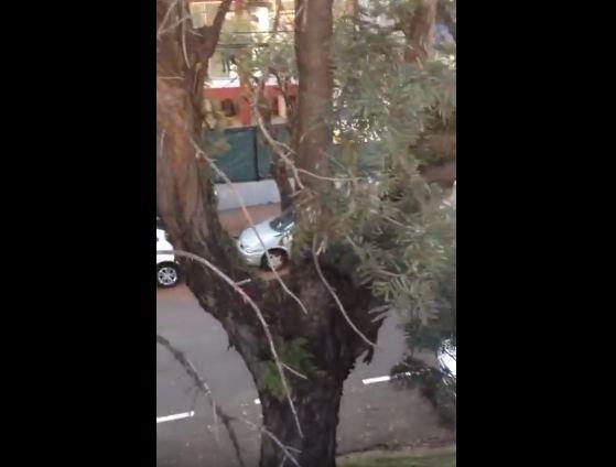 Arvore rua paranagua