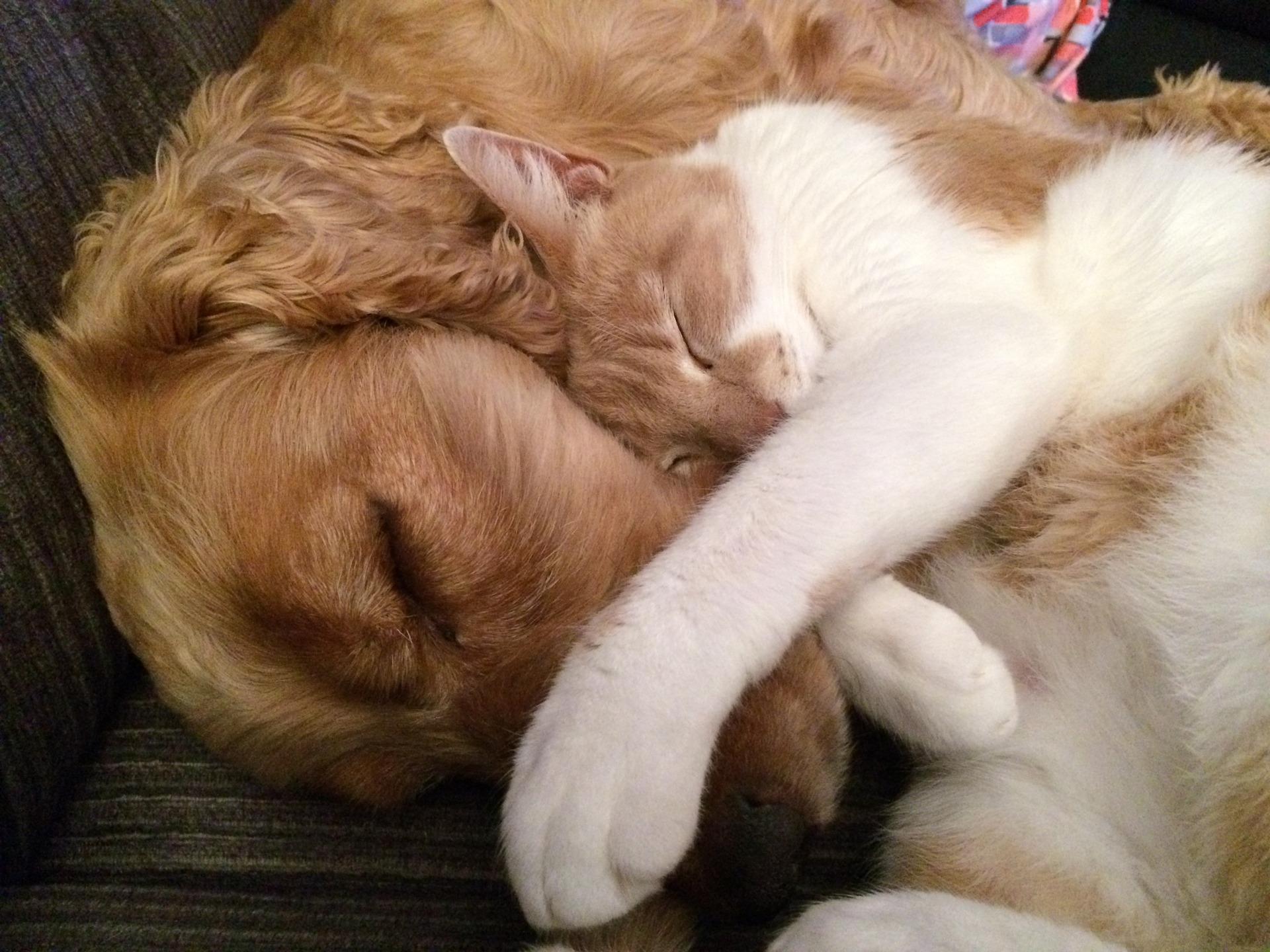 Cachorro e gato Foto Pixabay
