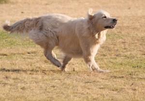 Cachorro - Foto Pixabay