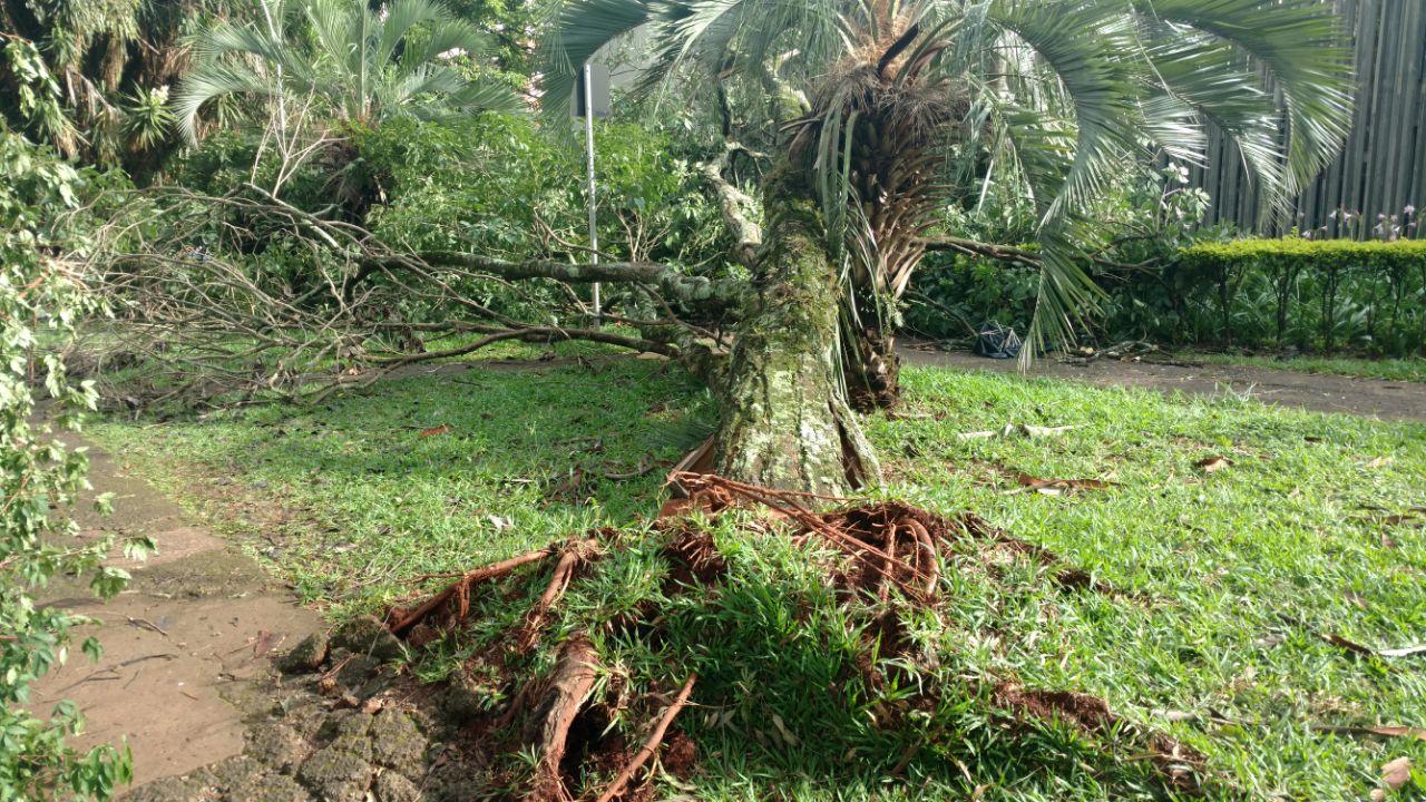 Arvores caidas no centro civico Foto Neto Almeida (6)