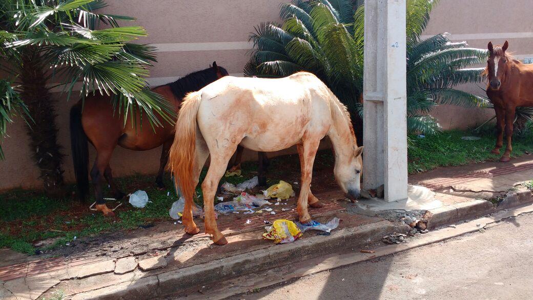 Cavalos soltos Foto WhatsApp Paiquere