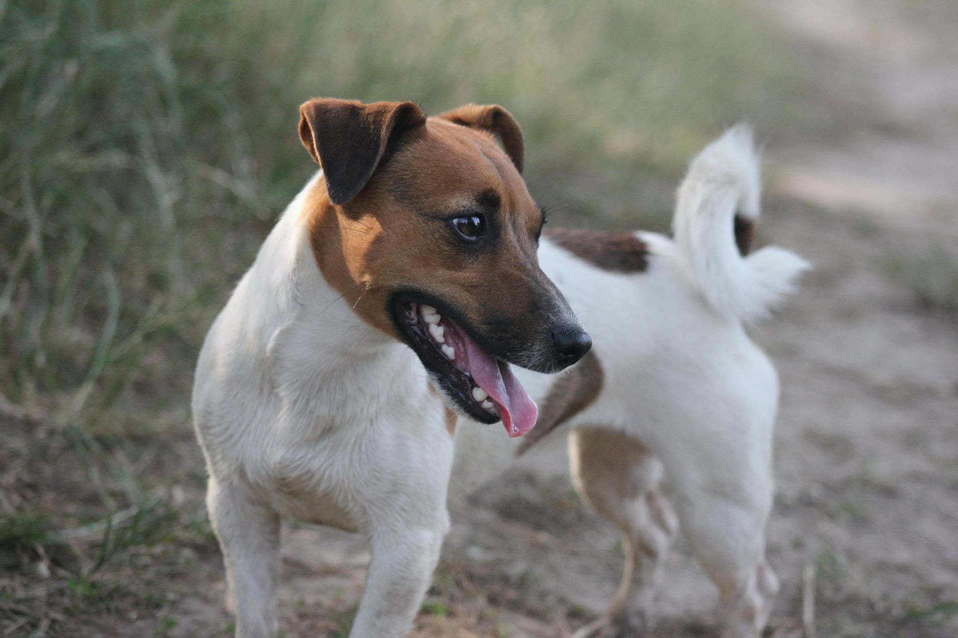dog-299380_1920