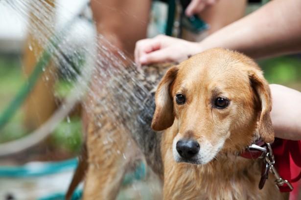 banho cachorro