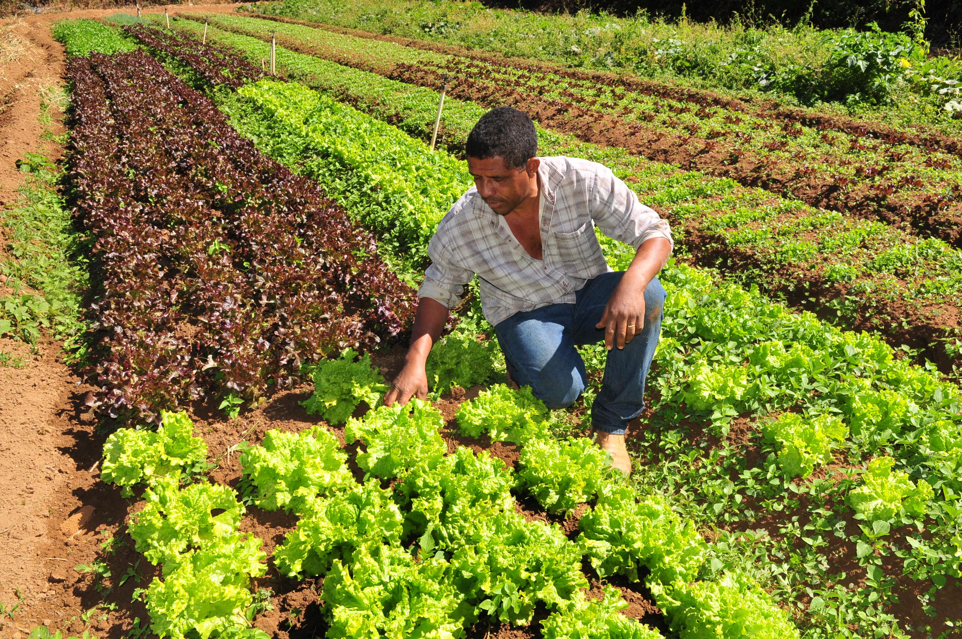 produtor rural Foto Tony Winston Agência Brasília