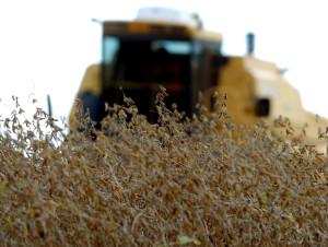 Colheita de soja. Foto: Jonas Oliveira