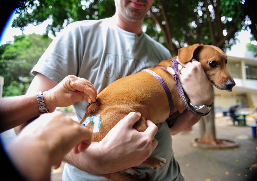 Vacina - cachorro. Foto: Marcelo Camargo/Agência Brasil