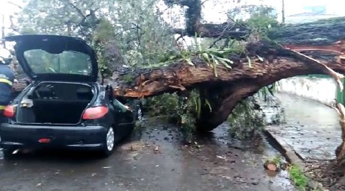 Na sexta-feira (3) uma árvore caiu em cima de um carro em movimento no centro. Foto: WhatsApp Paiquerê