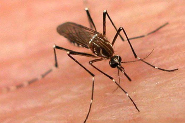 Londrina registra duas mortes suspeitas por dengue