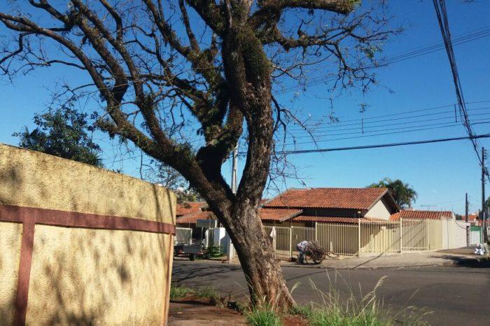 Procurador explica terceirização de empresa para erradicação de árvores