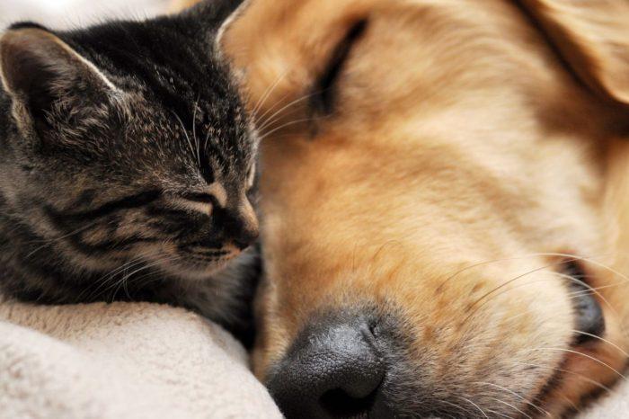 Boulevard Shopping tem feira de adoção de cães e gatos no domingo (18)