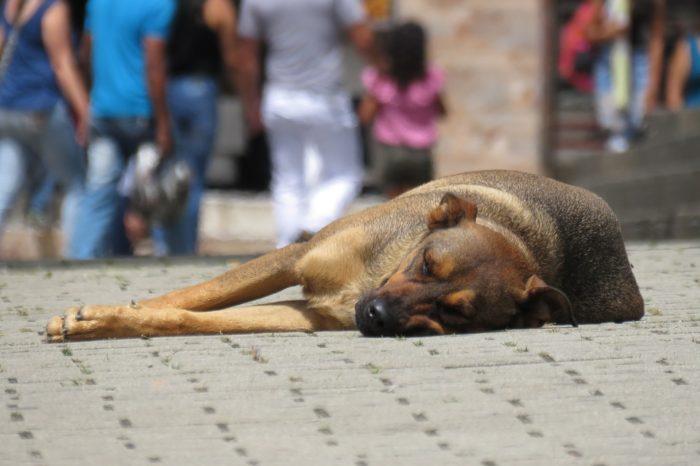 Vereadora propõe mês de conscientização contra abandono de animais