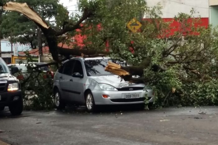 Vendaval provocou pelo menos 50 quedas de árvores em Londrina