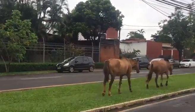Recolhimento de cavalos soltos resulta em ameaças de traficantes a fiscais da Sema