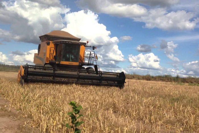 Safra da soja no Paraná tem projeção de quebra de 14% por causa do calor