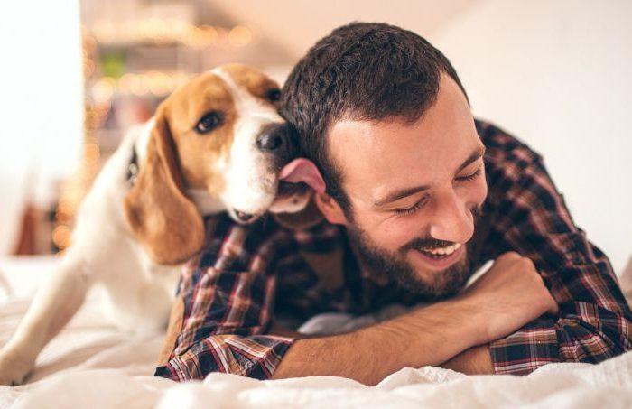 Comunicação dos cães com os seus donos