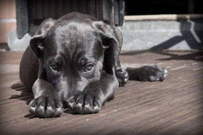Sem consenso, projeto que pune maus-tratos a animais é retirado de pauta