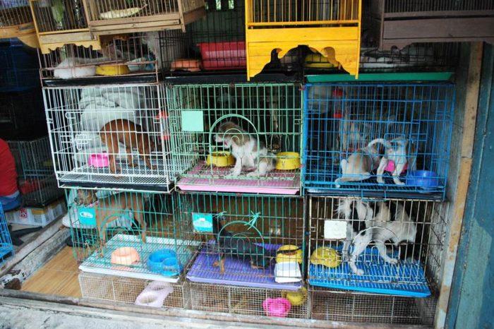 Urgência em projeto que proíbe venda de animais em pet shops é retirada