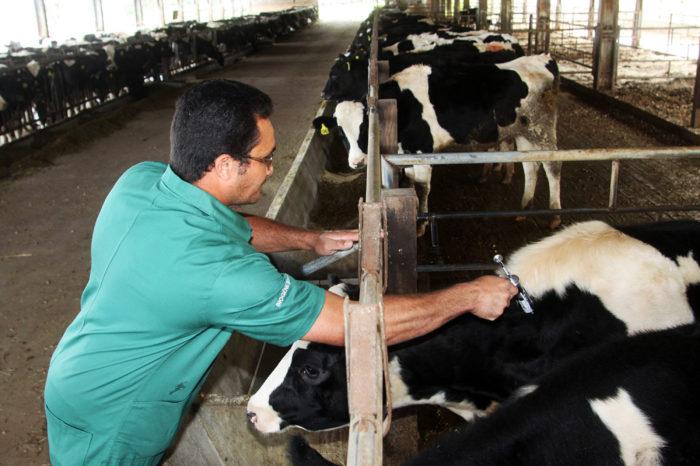 Fóruns sobre o fim da vacinação contra febre aftosa começam no Paraná