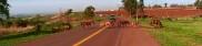 Internauta registra diversos cavalos soltos em rodovia