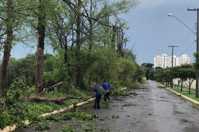 Mais de 60 árvores caíram durante temporal em Londrina