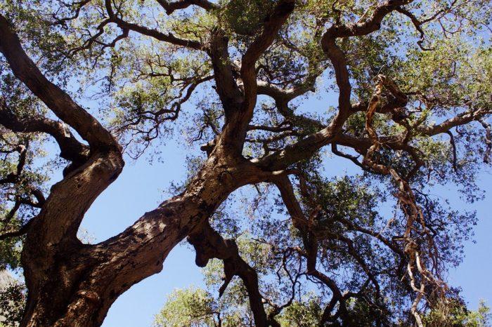 Vereador encontra resistência para projeto sobre poda de árvores