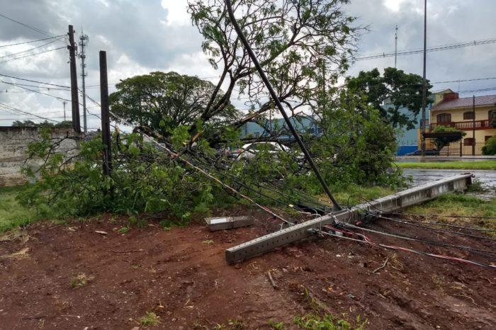 Forte vento derruba árvore de grande porte e poste na avenida Saul Elkind