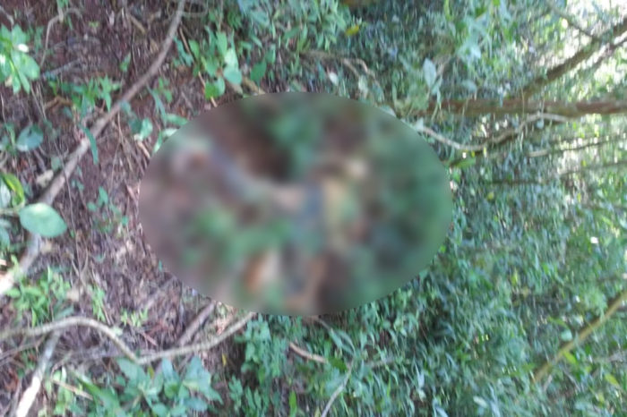 Corpo em estado de decomposição é encontrado em fundo de vale em Ibiporã