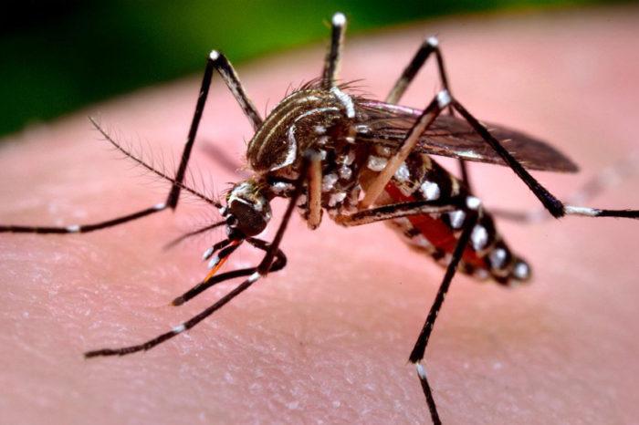 Paraná chega a 13.504 casos confirmados de dengue em menos de um ano