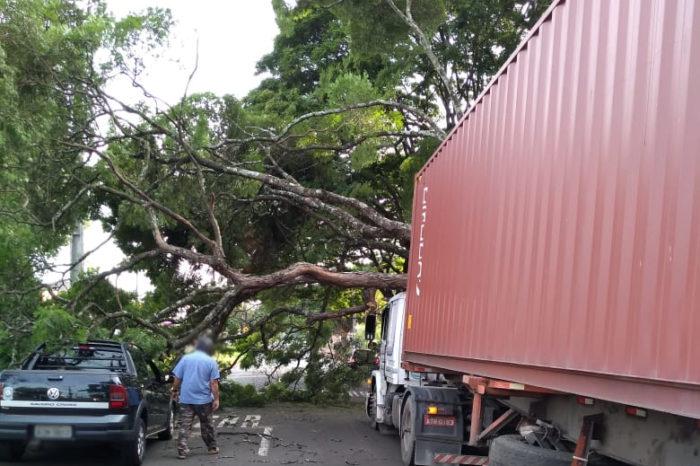Caminhão derruba parte de árvore sobre outro veículo na zona oeste