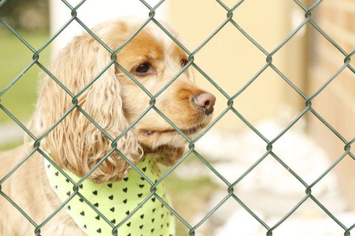 Câmara volta a debater proibição da venda de animais em pet shops