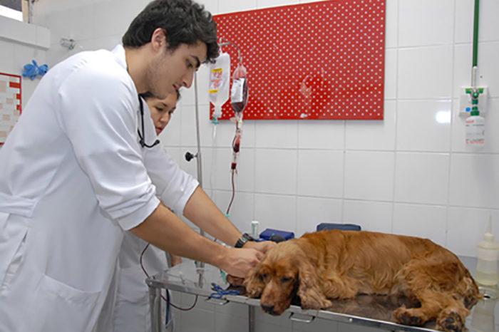 Hospital Veterinário da UEL está em busca de cães para doação de sangue