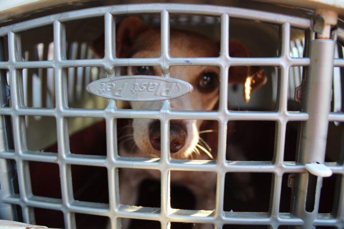 Tamarana inicia castração de animais de rua