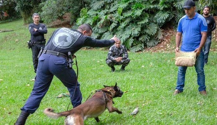 Grupamentos de operações com cães da GM, PM e Depen participam de treinamento