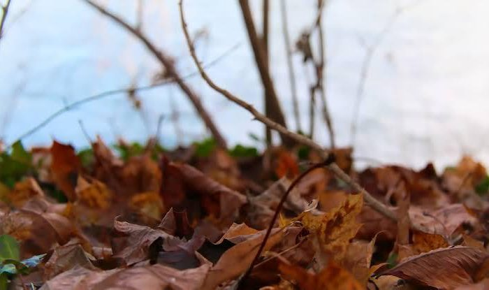Por que sentimos mais dor no outono e inverno?