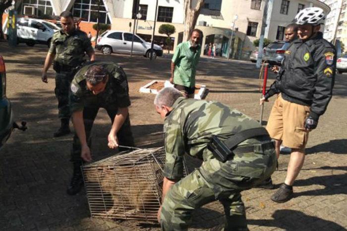 Populares encontram capivara em banheiro da Praça da Bandeira