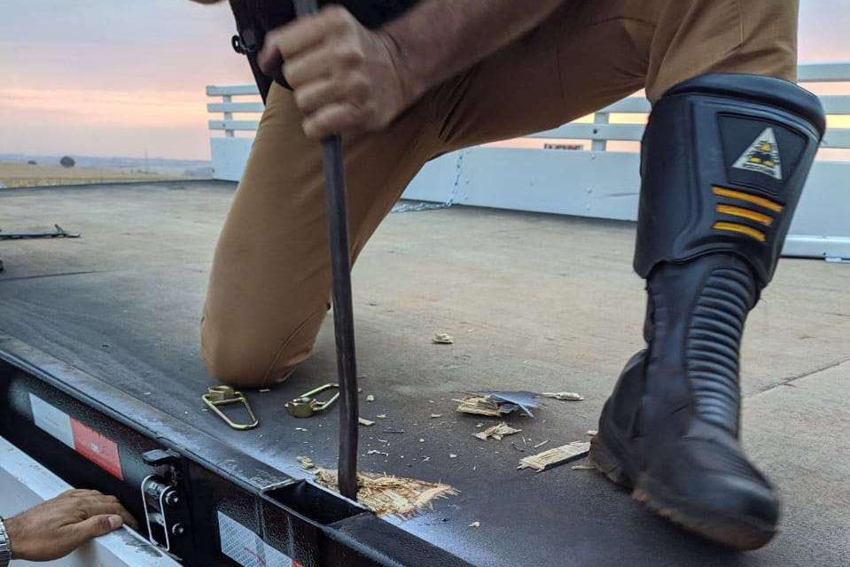 Quase 500 kg de maconha são apreendidos em fundo falso de caminhão e motorista alega inocência