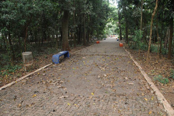 Com risco de contaminação, IAP tenta tirar macacos do Bosque Central