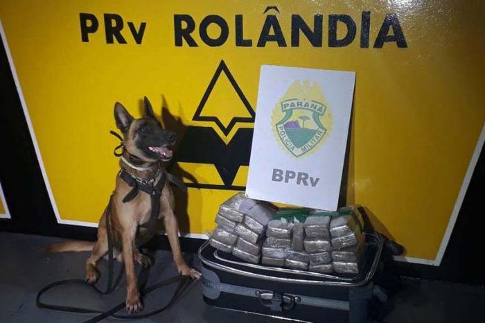 Jovem com bebê é detida transportando droga em malas na BR-369
