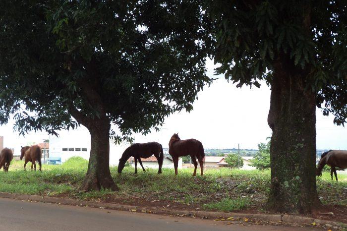 Após ameaças, Cambé busca parceria com PM para captura de cavalos soltos