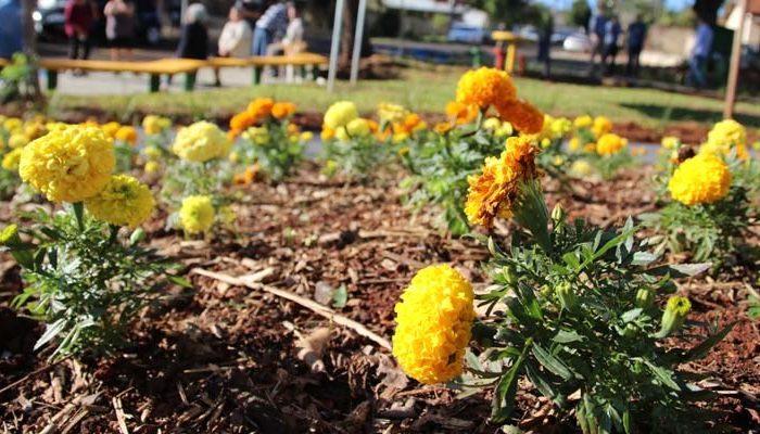 Prefeitura faz parceria com empresa para plantio de flores em avenida