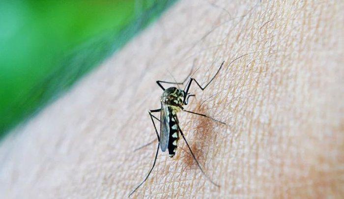 Saúde considera dengue controlada em Londrina