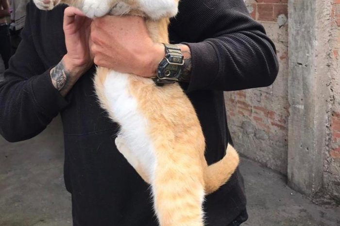"PCPR resgata gato que foi submetido a ""fumar"" maconha em Curitiba"