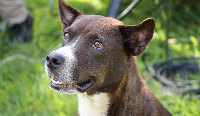 Londrina terá recantos de convivência para animais de estimação