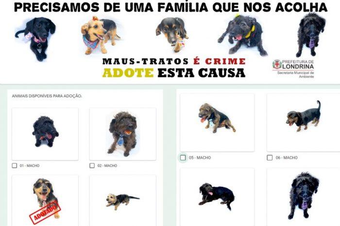 SEMA promove campanha de adoção responsável de animais