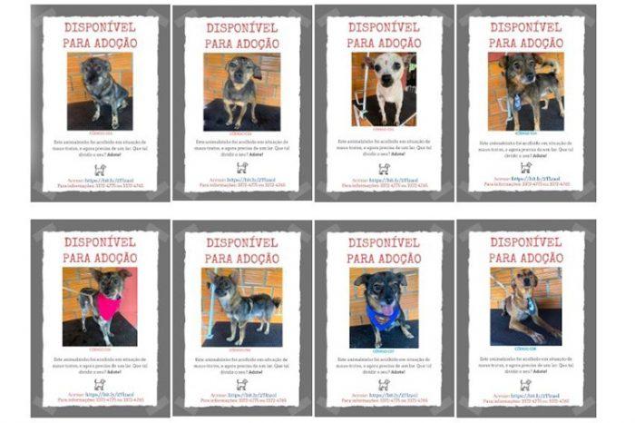 SEMA estimula a adoção responsável de animais