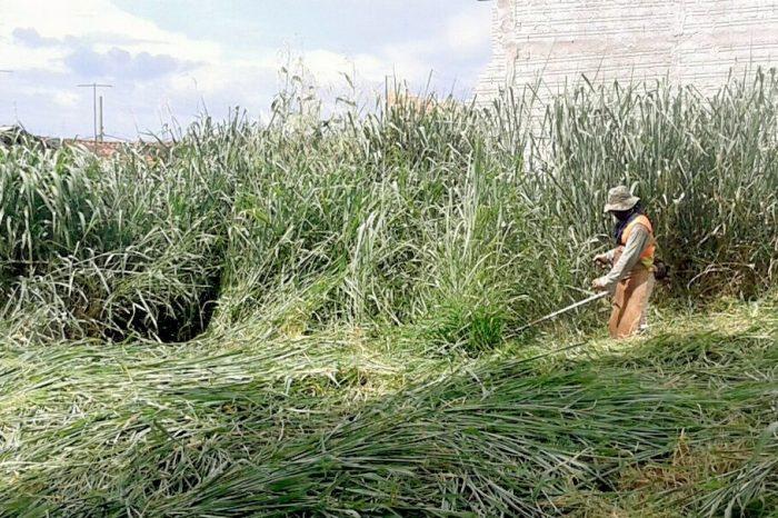 Município notifica proprietários a realizarem limpeza de terrenos