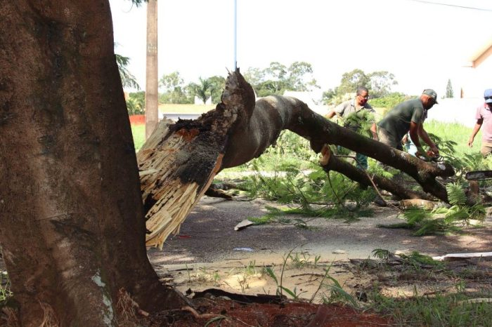 SEMA removeu 4 mil árvores comprometidas nos últimos 12 meses