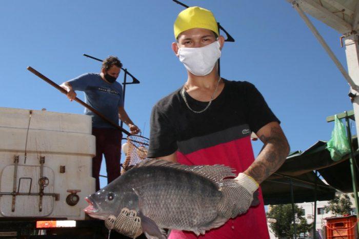 Feira do Peixe Vivo comercializou 12 toneladas de peixes