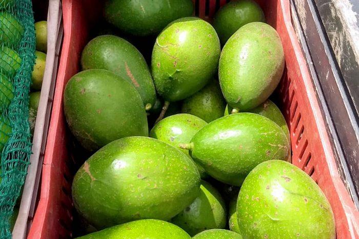 Paraná aumenta a produção de abacate, com destaque para o norte do estado