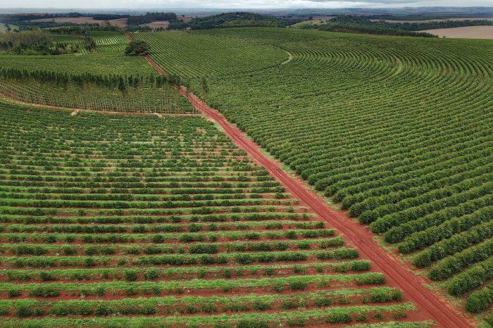 Governo emite novo alerta de geada para a região cafeeira do Paraná